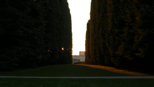 Treelined park at dusk