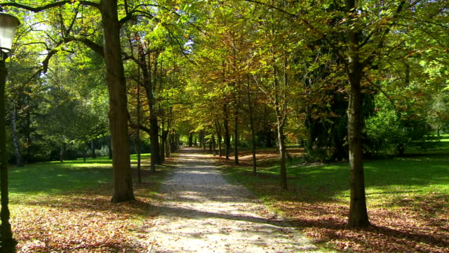 stockvideo's en b-roll-footage met treelined park promenade - footpath