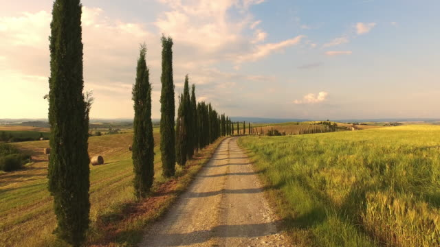 aerial treelined road along wheat field - tuscany stock videos and b-roll footage