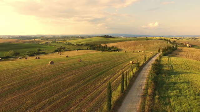 veduta aerea alberato strada in toscana - collina video stock e b–roll