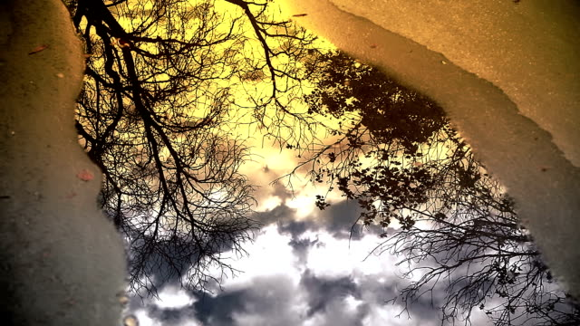 hd: trees and clouds in a puddle - still life stock videos and b-roll footage