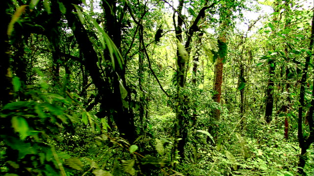 trees and dense vegetation grow in a costa rican rainforest. - thick stock videos & royalty-free footage