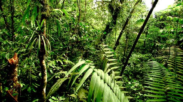 trees and dense vegetation grow in a costa rican rainforest. - 生い茂る点の映像素材/bロール