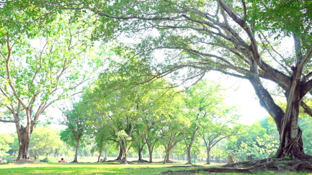 4k:公園の木々と落ち葉 - 庭点の映像素材/bロール