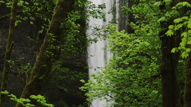 trees and foliage surround the silver falls at the columbia river gorge in oregon. - columbia river gorge stock videos & royalty-free footage