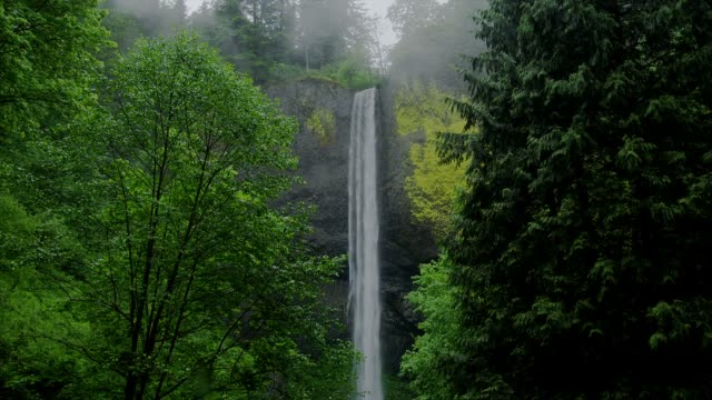Trees and foliage surround the Silver Falls at the Columbia River Gorge in Oregon.