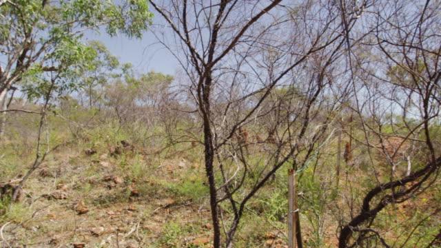 trees and grass with an adventurer - baumgruppe stock-videos und b-roll-filmmaterial