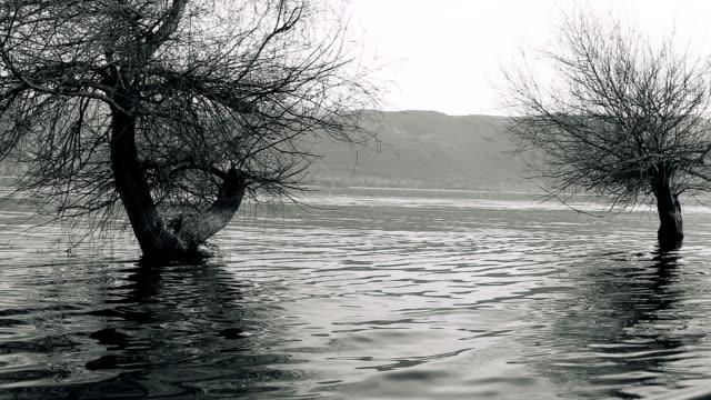 trees and lake - tonad bild bildbanksvideor och videomaterial från bakom kulisserna