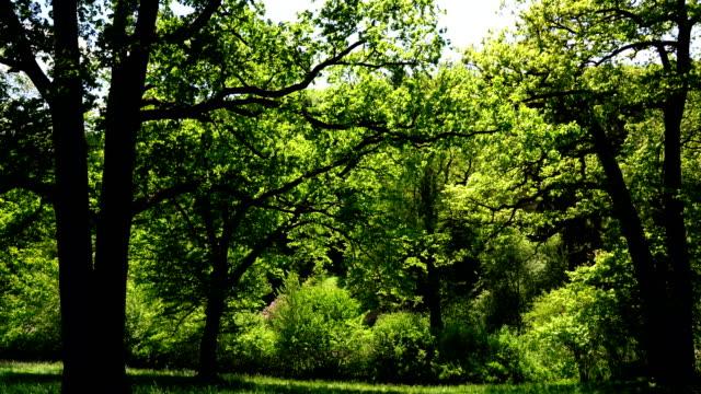 木と春の葉 - 木立点の映像素材/bロール