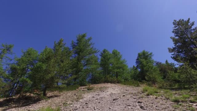 vídeos y material grabado en eventos de stock de trees and mountain in spring, land with pebbles - pinaceae