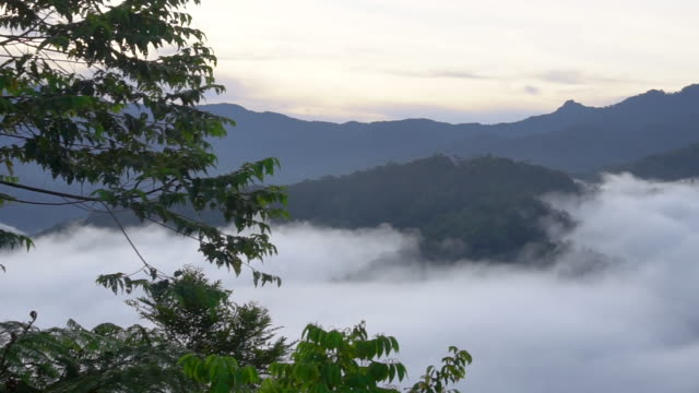 trees and mountains - papua stock videos and b-roll footage
