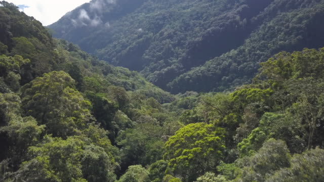 trees and mountains view - papua new guinea stock videos & royalty-free footage