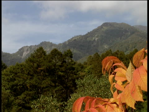 stockvideo's en b-roll-footage met trees and mountains with orange foliage in foreground japan - plant attribute