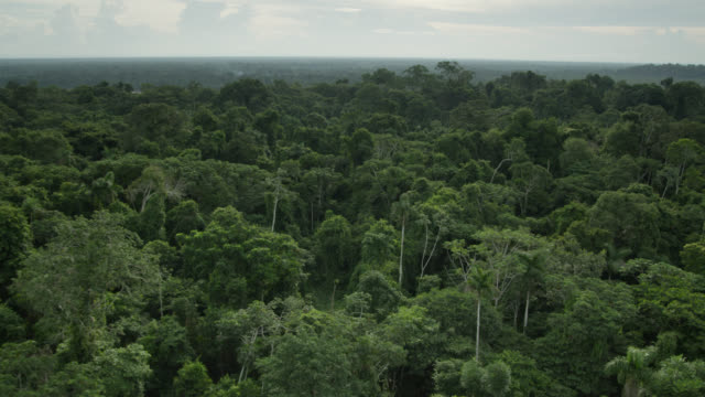 """trees and rainforest canopy, peru"" - copertura di alberi video stock e b–roll"