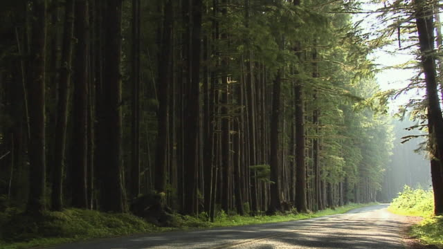 MS, Trees and road in forest, Olympic National Park, Washington, USA