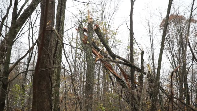 Trees are fallen into other trees after a severe autumn thunderstorm which may have included a tornado passed through Sunday November 5 2017 in...