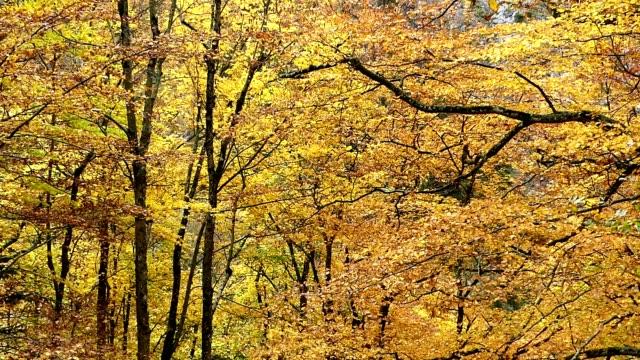 bäume rund um schloss neuschwanstein, deutschland - jahreszeit stock-videos und b-roll-filmmaterial