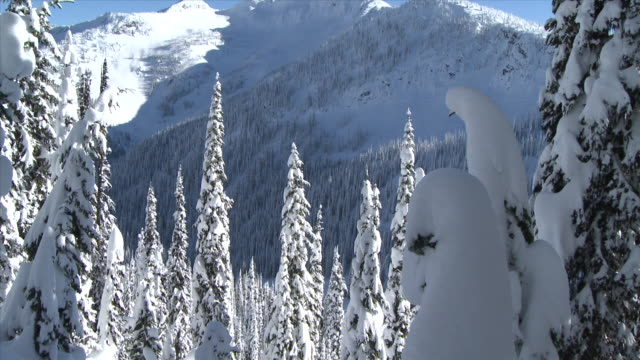 TD trees as snowboarder rides by / nelson, british columbia, canada
