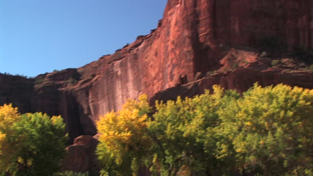 WS Trees at bottom of rock wall/ TU PAN rock wall/ Canyon de Chelly National Monument, Arizona