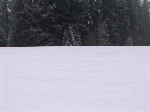 ms, zi, trees at field covered with snow, washington, usa - intricacy stock videos & royalty-free footage