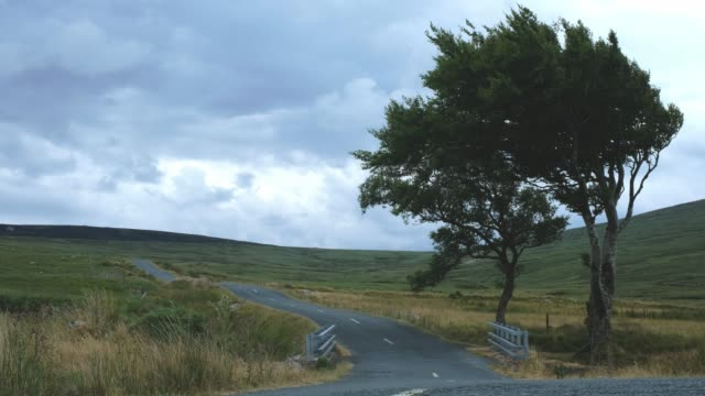 Trees at Sally Gap, Wicklow