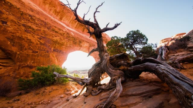 ds trees at the arches national park - moab utah stock videos & royalty-free footage