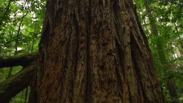 vídeos de stock, filmes e b-roll de trees bark and jungle - arbusto tropical