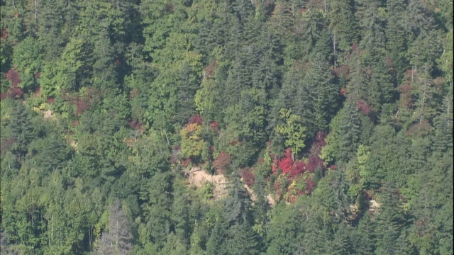 Trees begin to color in the forest of Hoheikyo in Japan.