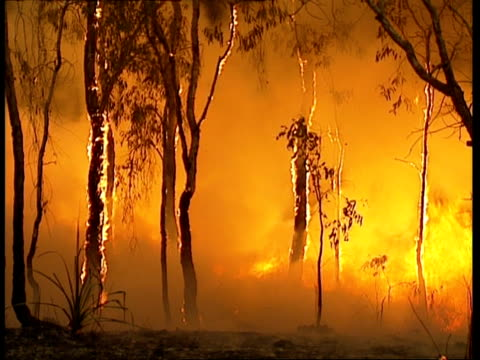 MS Trees beginning to burn in Australian bushfire