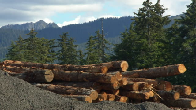 trees being cut down in the tongass national forest in alaska - forestry industry stock videos & royalty-free footage