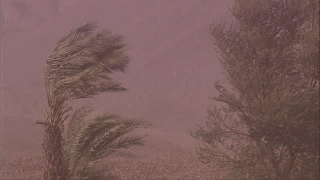 vídeos y material grabado en eventos de stock de trees bend in sandstorm winds. available in hd - vendaval de polvo