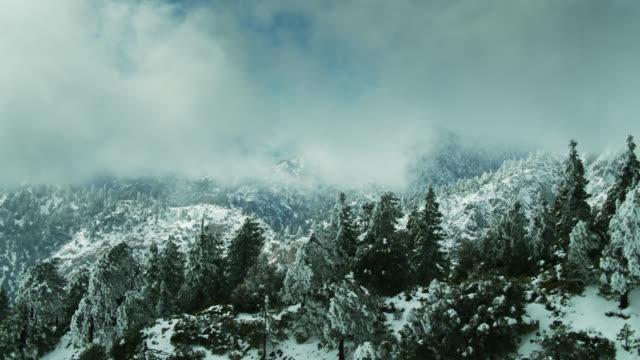 サンガブリエル山脈の雪の下で曲がった木々 - ドローンショット - エンジェルス国有林点の映像素材/bロール
