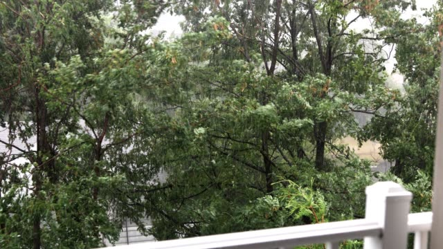 trees blow in strong hurricane wind and rain, view from balcony - microburst stock videos & royalty-free footage