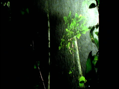 vídeos y material grabado en eventos de stock de trees blowing around in wind and rainstorm at night, branch falls towards camera - rama parte de planta