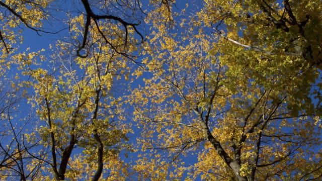 trees blowing in the wind - otago region stock videos & royalty-free footage