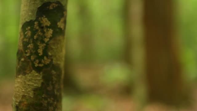 vídeos de stock, filmes e b-roll de tree's branch and forest trees - arbusto tropical