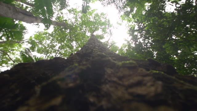 vídeos de stock, filmes e b-roll de trees branch and sunlight - arbusto tropical