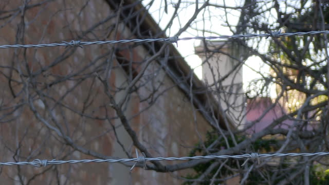 trees branches and barbwires - uk prison stock videos & royalty-free footage