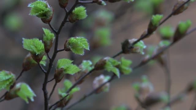 春の出芽樹木 - シュバルツバルト点の映像素材/bロール