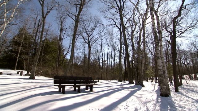 Trees cast shadows over a park bench in winter. Available in HD.