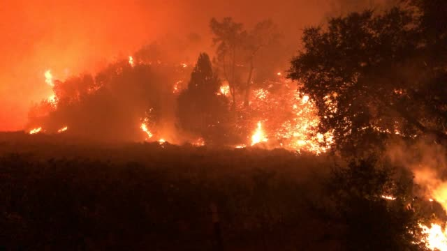 vidéos et rushes de trees continue to burn as the kincade fire moved through the area on october 24, 2019 in geyserville, california. fueled by high winds, the kincade... - californie