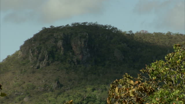 trees cover a hill near pedra pintada cave in brazil. available in hd. - roraima state stock videos and b-roll footage
