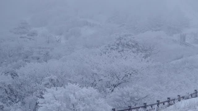 trees covered with hard rime on sobaeksan mountain in yeongju, korea - 雪が降る点の映像素材/bロール