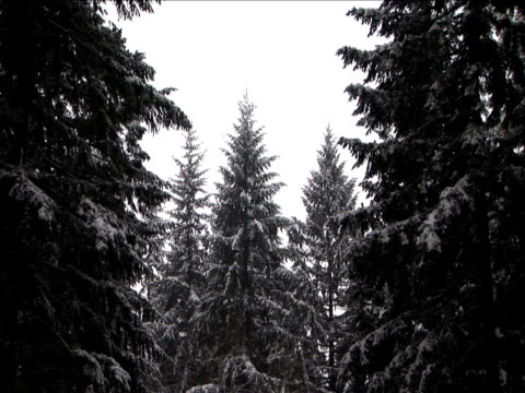 ms, zi, trees covered with snow, washington, usa - intricacy stock videos & royalty-free footage