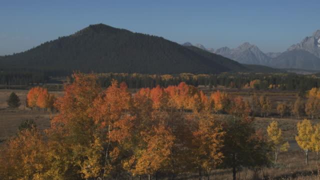 trees display autumn colors in a valley below the grand teton range. - grand teton stock-videos und b-roll-filmmaterial