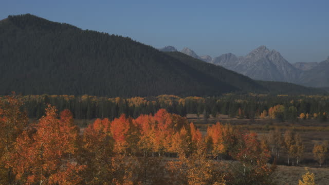 trees display autumn colors in a valley below the grand teton range. - grand teton stock videos & royalty-free footage