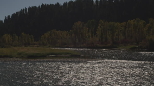 trees display autumn colors near a river in grand teton national park. - grand teton national park stock videos & royalty-free footage