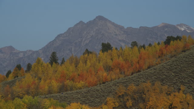 Trees display brilliant autumn colors at the foot of mountains near Jackson Lake in Grand Teton National Park.