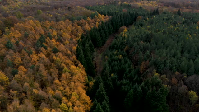 trees display their autumnal colours in forestry on november 11 2019 near sevenoaks england - autumn stock videos & royalty-free footage