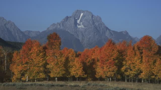 trees display vibrant autumn colors below grand teton. - grand teton stock-videos und b-roll-filmmaterial